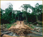 Clearing of the rainforests